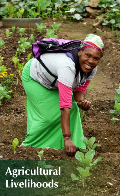 Agricultural Livelihoods